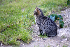 Cat Outdoor. Tabby cat sitting in a garden. Selective focus stock photo