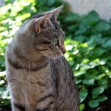 Cat Outdoor. Tabby cat sitting in a garden. Selective focus royalty free stock images