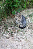 Cat Outdoor. Tabby cat sitting in a garden. Selective focus stock images