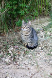 Cat Outdoor. Tabby cat sitting in a garden. Selective focus stock photography
