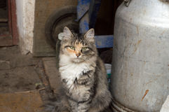 Cat outdoor. Cat in the village, she like to pose royalty free stock photo