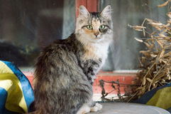 Cat outdoor. Cat in the village, she like to pose royalty free stock photos