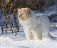 Cat outdoor during winter Royalty Free Stock Photos