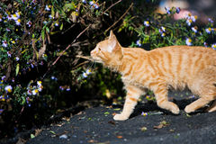 Cat outdoors. Cat walks in the summer on the street stock photo