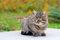 Cat outdoors Stock Photos