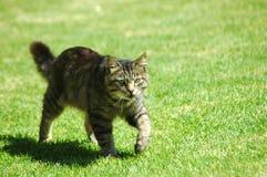 Cat outdoors Royalty Free Stock Photos