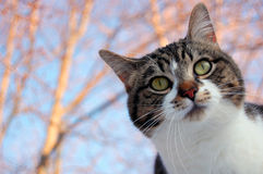 Cat Outdoors. A domestic cat outside for a breath of fresh air Royalty Free Stock Photos