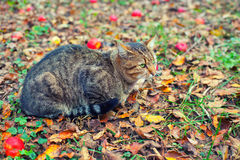 Cat outdoors in autumn Stock Photos