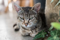 Cat outdoors Stock Images