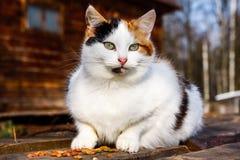 Cat outdoors Stock Photos