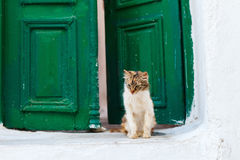 Cat outdoors Royalty Free Stock Images