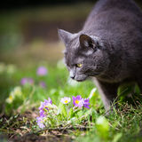 Cat outdoors on a green lawn Stock Image