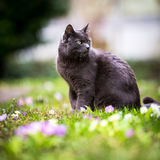 Cat outdoors on a green lawn Stock Photos