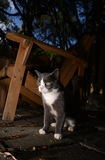 Cat outdoors at night in autumn Royalty Free Stock Images