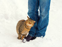 Cat outdoors in winter Stock Photography