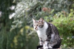 A cat outside Stock Photo