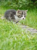 Cat outside Stock Images