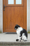 Cat outside door Stock Image