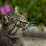 Cat outside with a Fall color background Stock Image