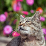 Cat outside with a Fall color background Stock Images