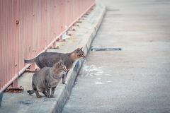 Cat outside a fence in an afternoon Stock Photo