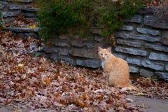 Cat Outside por una pared de piedra Imagen de archivo