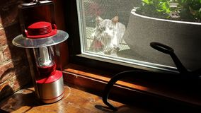 Cat outside the window Stock Image
