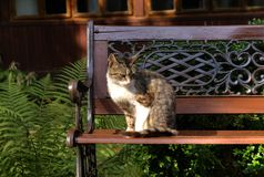 Cat over bench Stock Image