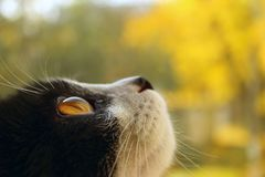 Cat Over Blurred Yellow Background Chat de smoking photographie stock