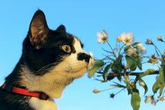 Cat Over Flowers Background Photographie stock libre de droits