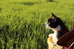 Cat Over Grass Background Cat Looking To The Side, tiro cosechado fotos de archivo