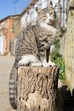 Cat over log, front view Stock Photo