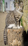 Cat over log, front view Stock Photos
