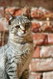 Cat over wall background Stock Image