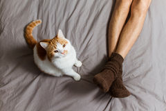 Cat with owner on bed. Royalty Free Stock Image
