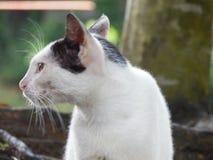Cat. Owsamcat  buatyfull cat marvellous cat nice Stock Photos