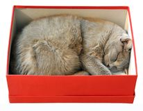 Cat package Stock Image