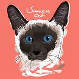 Cat Painting Poster siamese Fotografia Stock Libera da Diritti