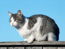 Cat on the pale. Cat, sitting on the pale Stock Photography