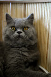 Cat panic Stock Images