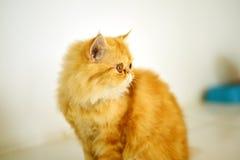 Cat panic Stock Photography