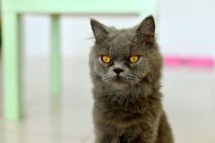Cat panic Stock Image