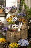 Cat with pansies in garden setting Royalty Free Stock Photo