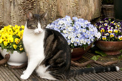 Cat with pansies in garden setting Stock Photos