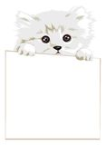 Cat with paper Stock Photo