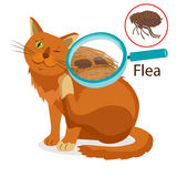 Cat Parasite. Pet Flea Treatment. Spread Of Infection. Pet Veterinary Medicine Vector. Cat Parasite. Pet Flea Treatment. Flea In The Fur As A Close Up Royalty Free Stock Photography