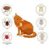 Cat Parasites Vad som ska vetas om katt- parasit Älsklings- hud- och pälsparasitvektor Loppa fästing, örakvalster, pälskvalster,  Royaltyfri Bild