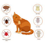 Cat Parasites. What To Know About Feline Parasites. Pet Skin And Fur Parasites Vector. Flea, Tick, Ear Mite, Fur Mite, Harvest Mit Royalty Free Stock Image