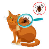 Cat Parasites. What To Know About Feline Parasites. Tick On Cat In The Fur As A Close Up Magnification Vector. Royalty Free Stock Image