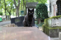 Cat  in Paris Montmartre Cemetery. Cat in Paris Montmartre Cemetery Royalty Free Stock Image